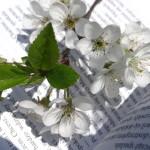Kolor biały w poezji